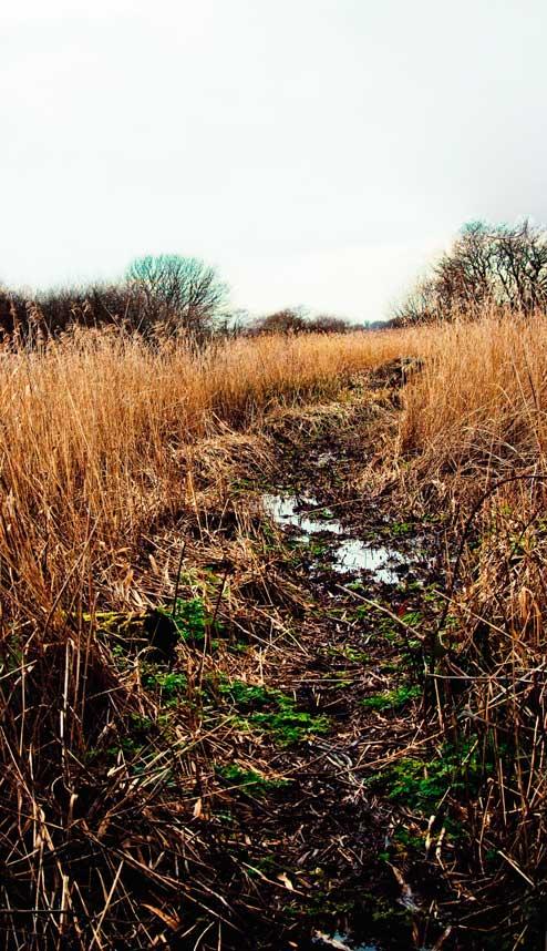 muddy-field